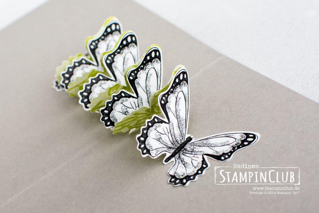 Stampin' Up!, StampinClub, Sale-A-Bration, Designerpapier Schmetterlingsvielfalt, Botanical Butterfly DSP, Stanze Schmetterlingsduett, Textured Impressions Tiefen-Prägeform Spitze, Lace Dynamic Textured Impressions Embossing Folder